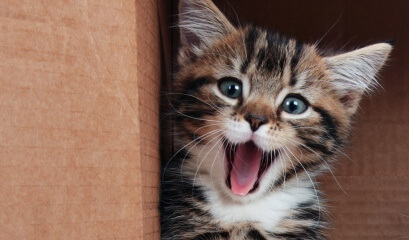 7 Curiosidades sobre os gatos