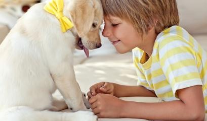 7 dicas para ter um novo cachorro