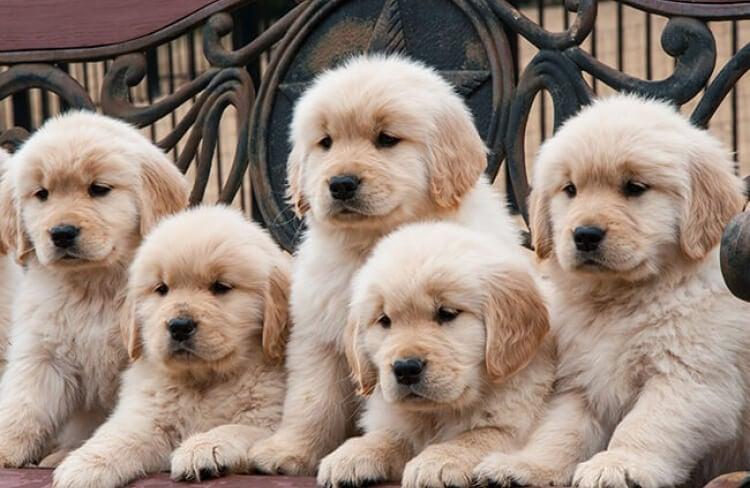 Você conhece as raças de cães?