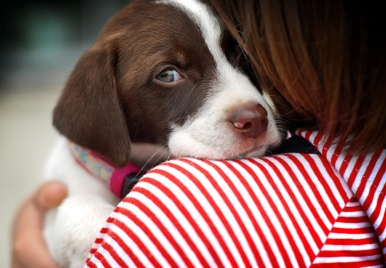 Vamos adotar?! Confira as feiras de adoção no Dia Mundial dos Animais