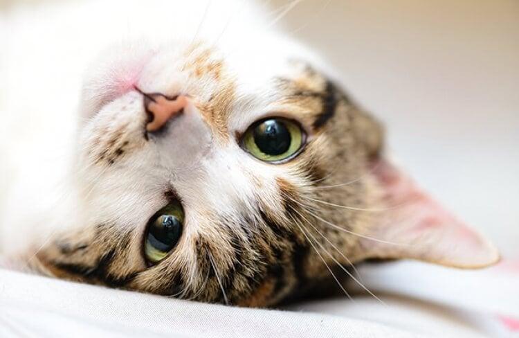 Entenda as expressões e posturas do seu gato