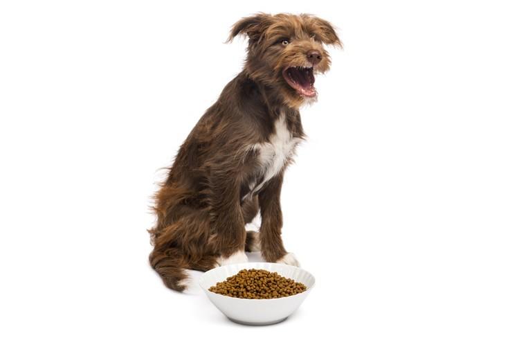 O que fazer quando seu cachorro se cansou da ração dele?