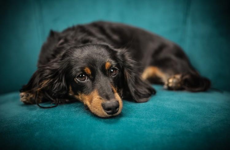 Conheça as principais vacinas para cachorros