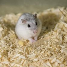 Conheça os principais cuidados para um roedor de estimação