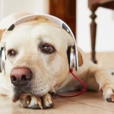 Música para cachorro: veja os benefícios de deixar o seu pet ouvir música