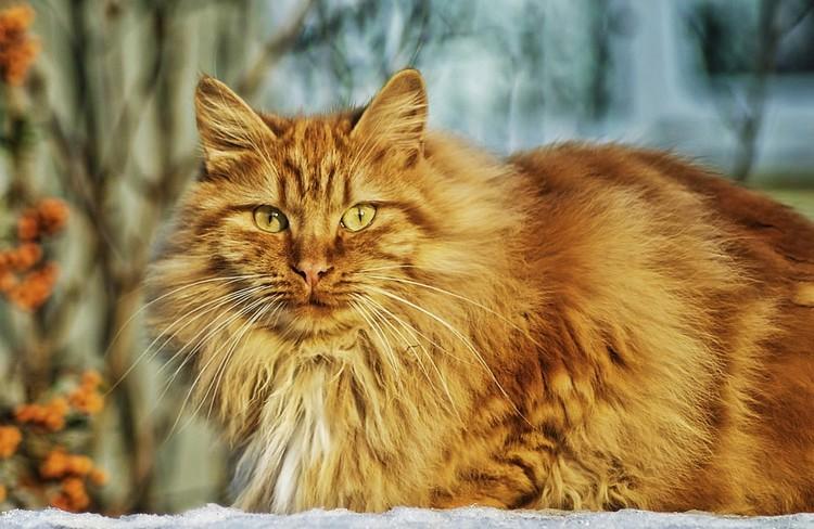 Conheça as 5 principais doenças que atingem os gatos