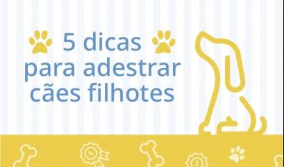 5 dicas para adestrar cães filhotes